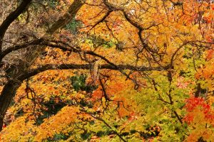 autumn-tree_fjdvypk_
