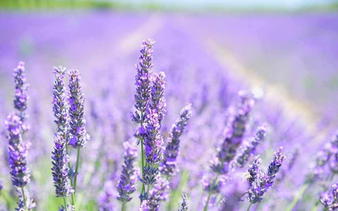 Aromatherapy for Sleep: How to use Essential oils for a more restful night