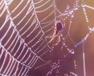 Spider in nature, sitting on his web. Insect macro