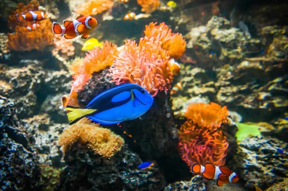 Finding Dory at the National Sea Life Centre